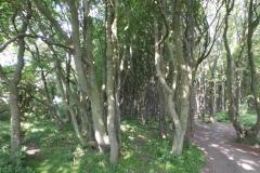 """Der """"Gespensterwald"""" in Richtung Nienhagen"""